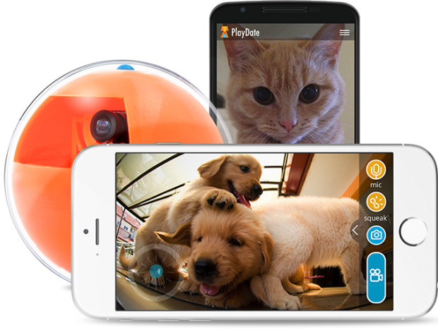playdate camera animaux