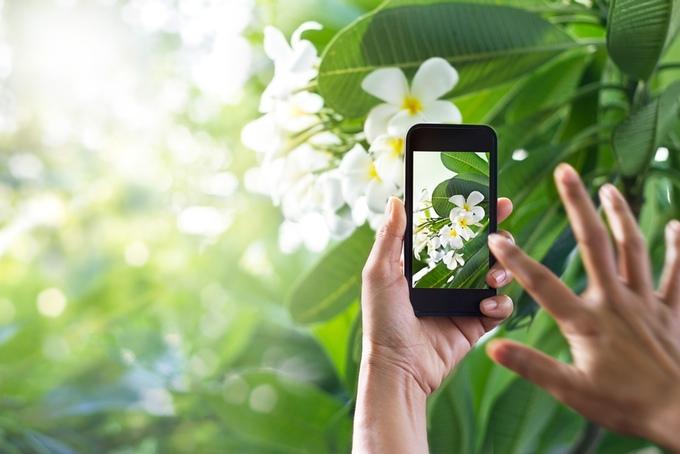 plantsnap identifiez les plantes gr ce une application. Black Bedroom Furniture Sets. Home Design Ideas
