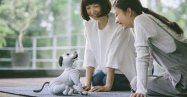 Aibo - L'adorable chien robotique de Sony sera bientôt en vente