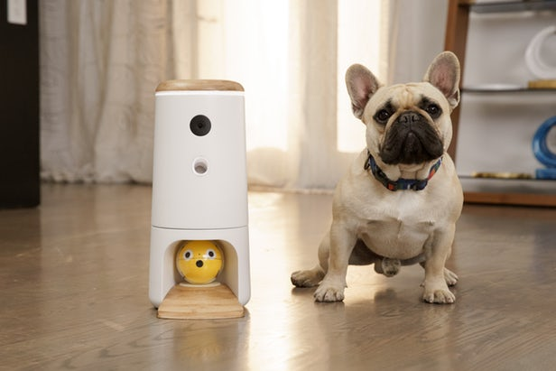 Pupple L'objet connecté pour divertir vos chiens 1