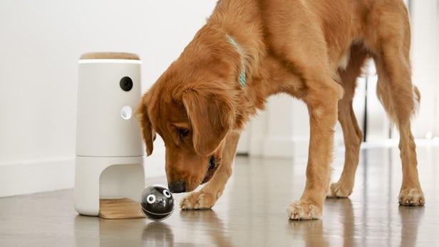 Pupple L'objet connecté pour divertir vos chiens