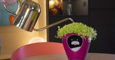 Lua – Un pot connecté pour conserver vos plantes en bonne santé