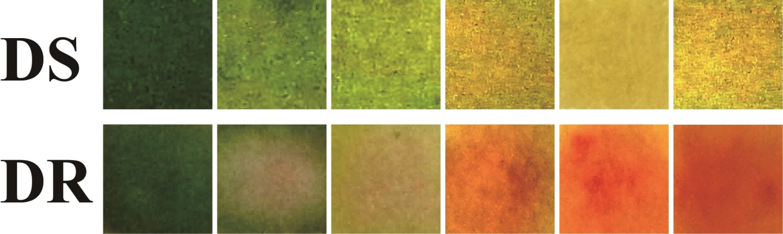 Ce pansement intelligent change de couleur pour indiquer une infection 1