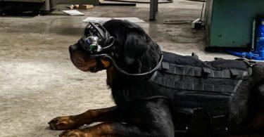 Des lunettes AR pour les chiens de l'armée américaine