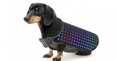 Disco Dog manteau connecté chiens