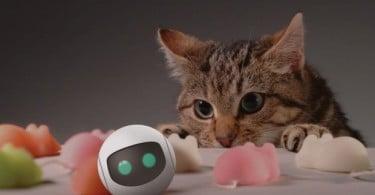 RollyCat objet connecté chat