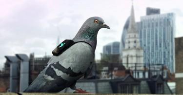 Air Patrol pigeons connectés pollution Gary Fuller