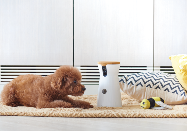 Furbo caméra connectée Dog Sitter