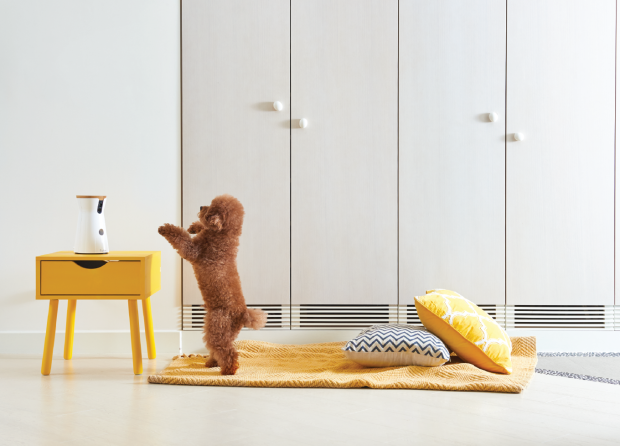 Furbo - La caméra connectée Dog Sitter