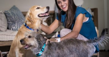 Delta Smart collier connecté chiens Garmin