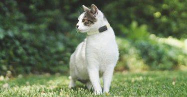 Wamiz et Invoxia s'associent pour créer un tracker pour chats et chiens