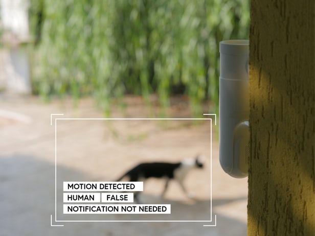 Eyecloud Cam ne perdra pas de temps à enregistrer des intrus félins