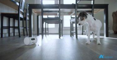 Varram Pet Fitness – Un robot qui distribue des friandises à vos animaux pour les stimuler