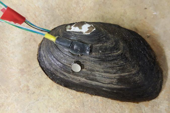 Des robomoules vont désormais détecter la pollution dans l'eau